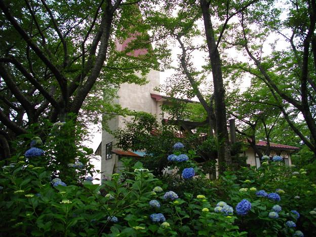 宮島緑の村~紫陽花シャトー