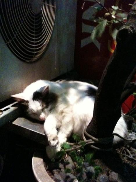 写真: 武蔵小山周辺は猫ちゃんがい...