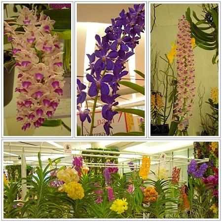バンコク・ランの花の祭典