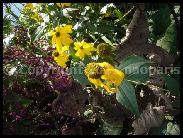 Photos: P2880293