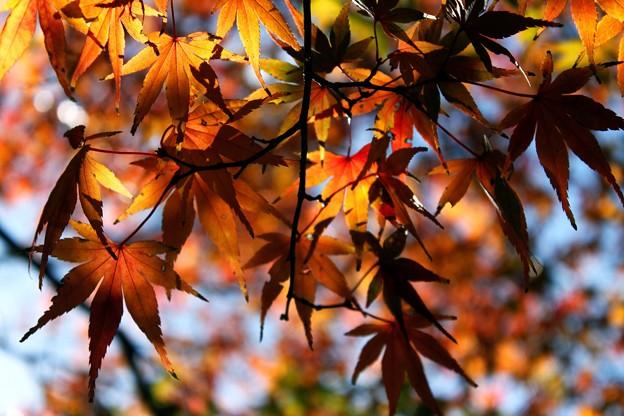 Photos: 穏やかな光と紅葉-G