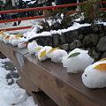 Photos: 雪ウサギ