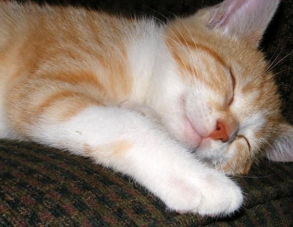 kitten1035_10