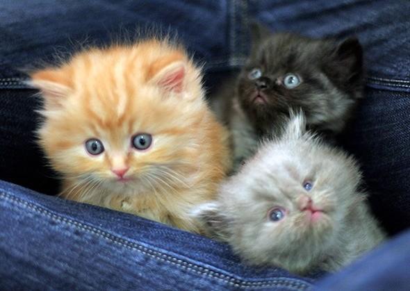 kitten1044_13