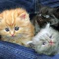 Photos: kitten1044_13