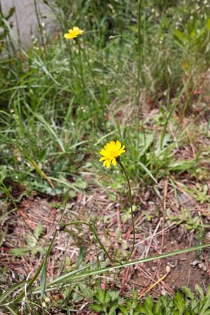 Flower05132011dp1-01