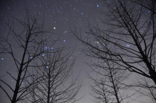 冬の星座と木々