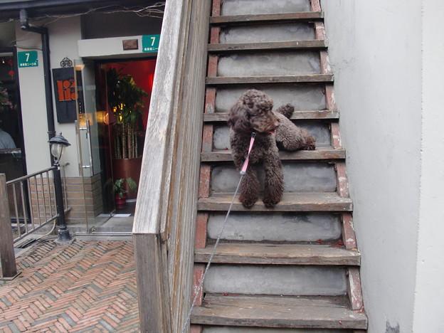 田子坊 階段途中でお座りッ!!