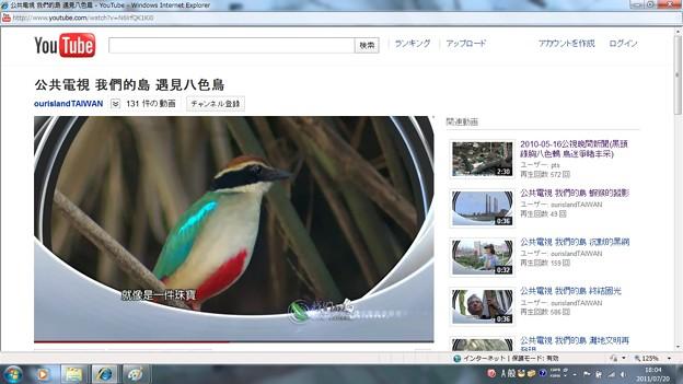 写真: TVニュースのヤイロチョウ