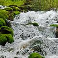 チャツボミゴケの在る滝2