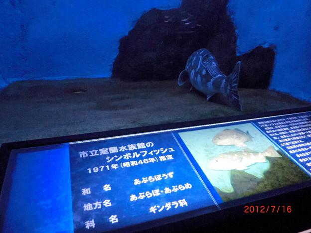 室蘭水族館(2012.7).12
