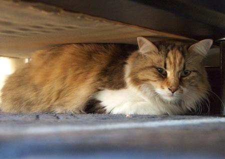 午前中はソファーの下