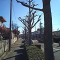 Photos: 今朝の散歩 その2