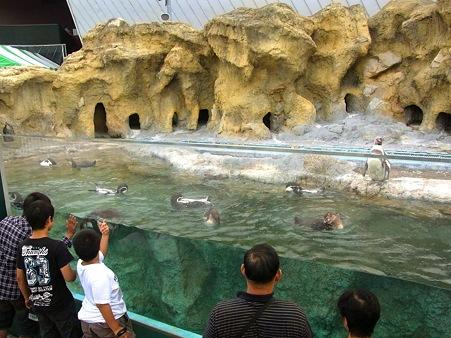 20110815 海響館 ふれあいエリア01