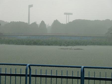 蓮池も雨4019