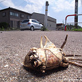 Photos: カニの死