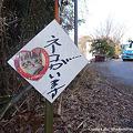 Photos: ネコがいます。