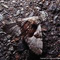 写真: yamanao999_insect2011_301