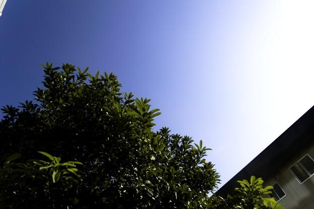Photos: 2010-12-02の空