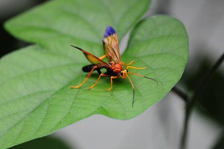 初めて見る不思議な昆虫