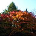 写真: 桂春院の紅葉