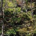 写真: 常寂光寺庭園