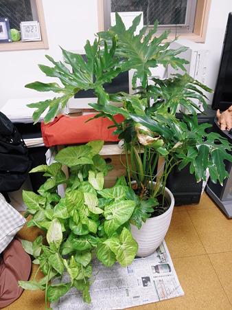 2011年09月20日_P9200800