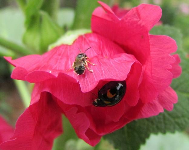 蜂とてんとうと赤
