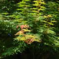 Photos: 20100604_075543
