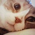 写真: 添い寝モモ
