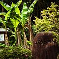 Photos: ふるさと芭蕉の森