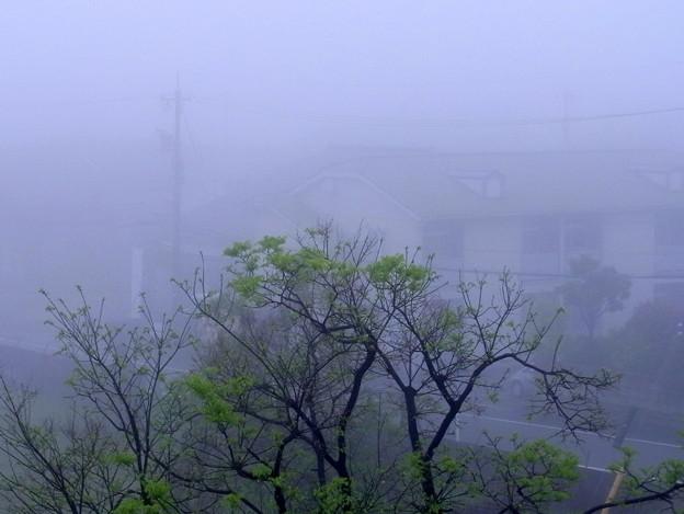 Photos: 濃霧