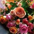Photos: 薔薇の香り