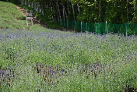 ファームとみた ラベンダー畑