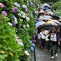 Photos: 湘南散歩25