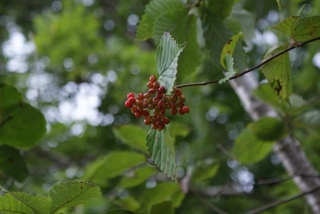 名前のしらない木の実