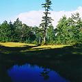 写真: 神秘的な池塘