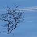 Photos: The Blueberry Bush