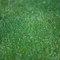 The Overgrown Lawn Decorated with the Morning Dew