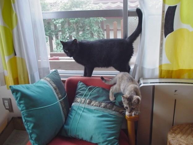 窓辺のがっちゃんとマリ2