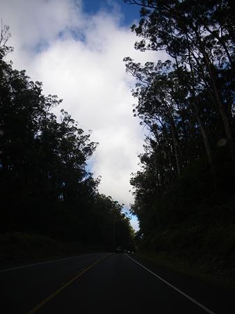森を抜けると