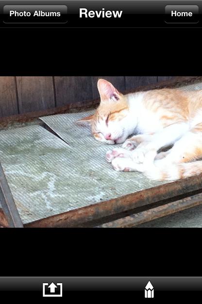 Photos: 猫猫