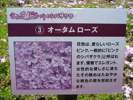 100518-富士芝桜まつり-24
