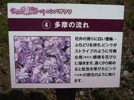 100518-富士芝桜まつり-32