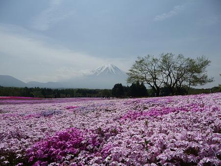 100518-富士芝桜まつり-40