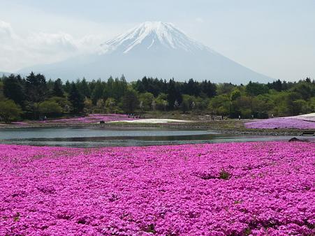 100518-富士芝桜まつり-50