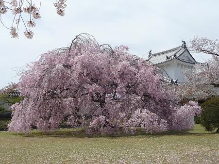 110417-姫路城 (193)
