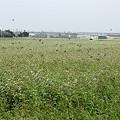 蕎麦畑とスズメ01-11.09.07