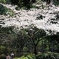 写真: 20110331_140302_raw