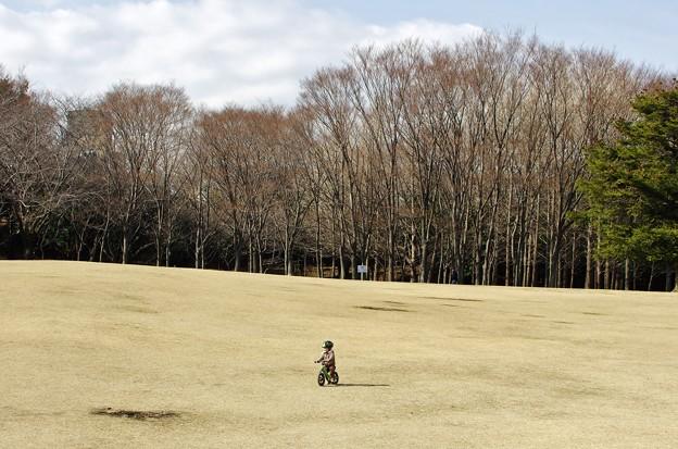 根岸森林公園。
